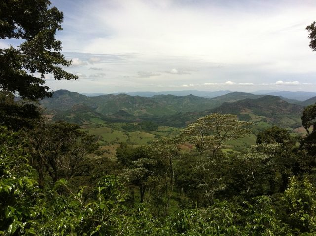 Вид на горы с кофейной плантации в Никарагуа