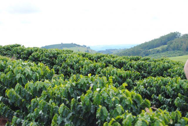 Кофейная ферма в Бразилии