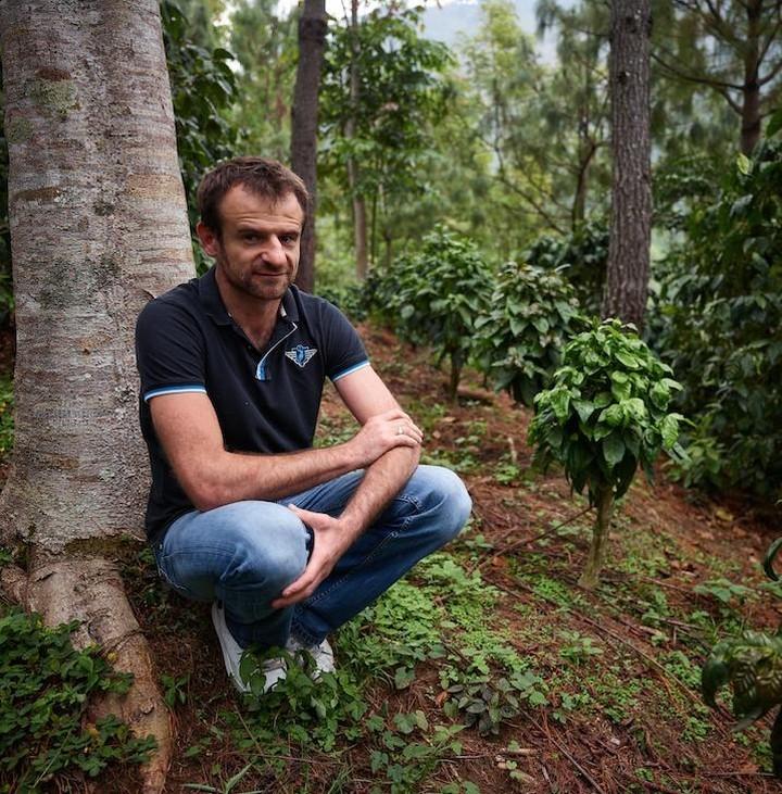 Саса Сестик проверяет кофейные деревья на плантации