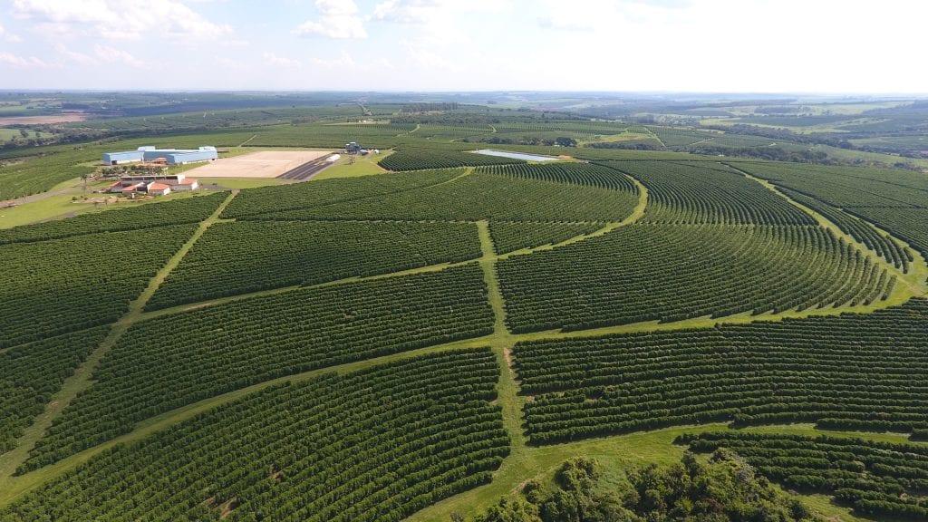Часть плантаций O'Coffee Brazilian Estates и станция мытой обработки