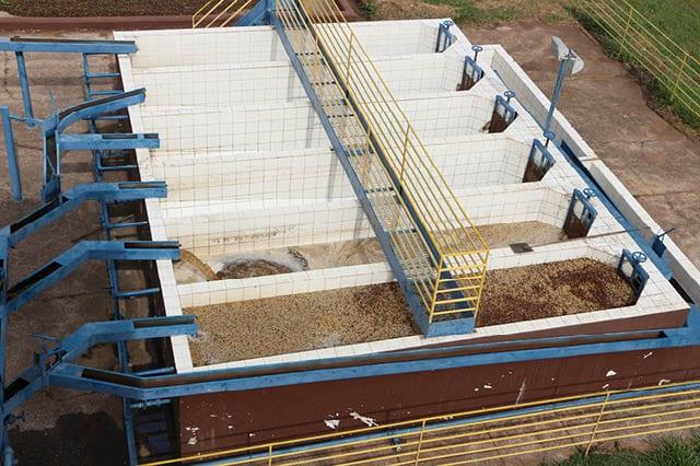 Желтый катуаи в резервуарах для ферментации во время мытой обработки