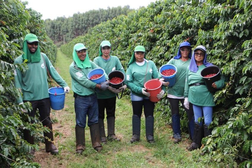 Рабочие выборочно собирают ягоды красного акаи на ферме Fazenda Nossa Senhora Aparecida