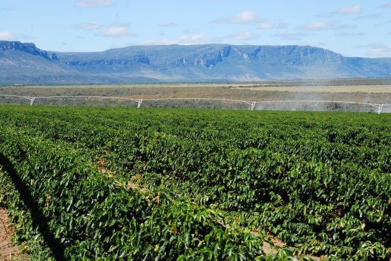 Кофейная плантация в штате Баия